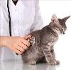 Ветеринарные клиники в Керженце